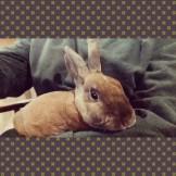 Rabbit Karrie