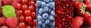 berries-1499900__340