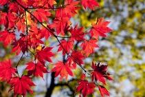 autumn-2789234_640